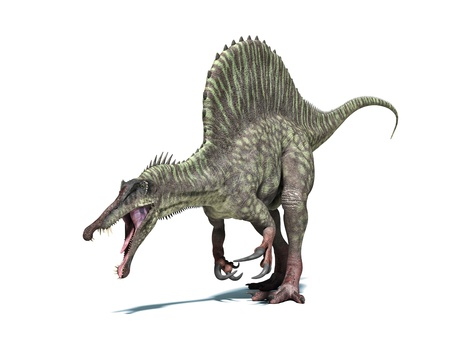 spinosaurus: Spinosaurus dinosaur. Very detailed and scientifically correct. Isolated on white background with drop shadow and clipping path included.