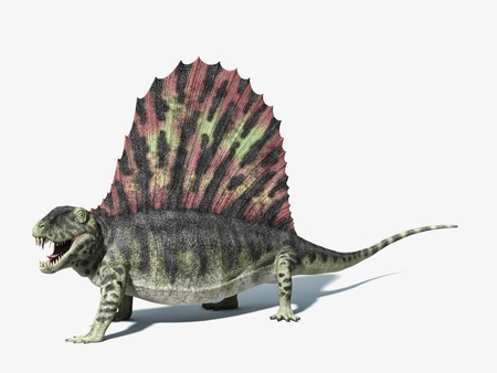 Dimetrodon dinosaur. very detailed and scientifically correct. On white background with dropped shadow and clipping path.