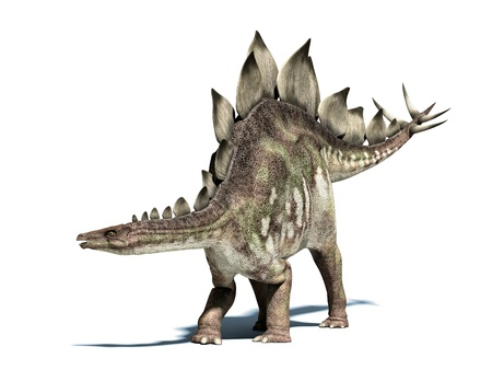 scientifically: Stegosaurus dinosaur. Very well detailed and scientifically correct. Isolated on white, with drop shadow and clipping path.