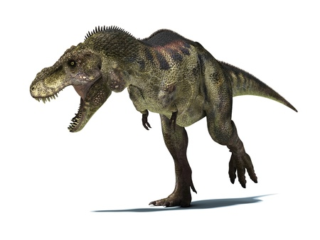 Tyrannosaurus Rex, very well detailed and scientifically correct. isolated on white background with clipping path.