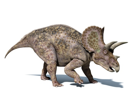Triceratops dinosaur, very well detailed and scientifically correct. isolated on white background, with clipping path.