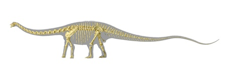 diplodocus: Diplodocus dinosaur silhouette, with full photo-realistic skeleton. On white background with clipping path.