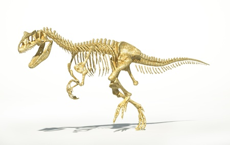 biological sciences: Allosaurus dinosaur skeleton photo-realistic, scientifically correct. On white background with drop shadow.