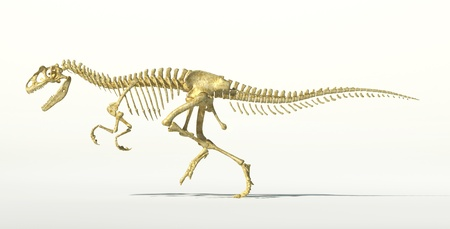 scientifically: Allosaurus dinosaur photo-realistic skeleton. Scientifically correct rendering, on white background and drop shadow, with clipping path. Stock Photo