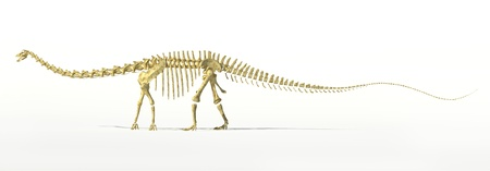 diplodocus: Diplodocus dinosaur full skeleton photo-realistc rendering. Scientifically correct. Side view, on white background with drop shadow and clipping path.
