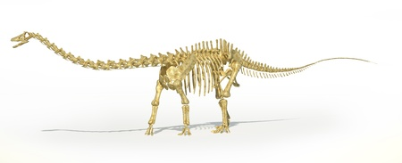 scientifically: Diplodocus dinosaur full skeleton photo-realistc rendering. Scientifically correct. Perspective view, on white background with drop shadow and clipping path. Stock Photo