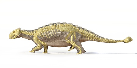 scientifically: Photorealistic 3 D rendering, scientifically correct of an Ankylosaurus, with full bone skeleton superimposed, Side view with drop shadow. Clipping path included.