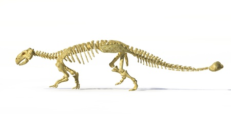 3 d illustrations: Photorealistic 3 D rendering, scientifically correct of an Ankylosaurus dinosaurus full bone skeleton. Side view with drop shadow. Clipping path included. Stock Photo