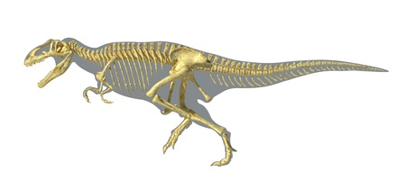 scientifically: Gigantosaurus dinosaurus full photo-realistic skeleton, scientifically correct, on body silhouette. On white background with clipping path.