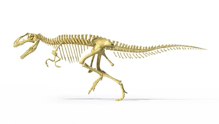 Gigantosaurus dinosaurus full photo-realistic skeleton, scientifically correct, side view. On white background  with drop shadow and with clipping path. photo