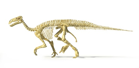 scientifically: Iguanodon dinosaur full skeleton photo-realistic and scientifically correct, side view. On white background with drop shadow and clipping path.