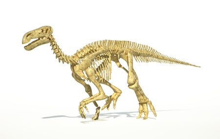 scientifically: Iguanodon dinosaur full skeleton photo-realistic and scientifically correct, perspective view. On white background with drop shadow and clipping path. Stock Photo
