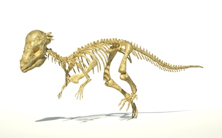 Pachycephalosaurus dinosaur, full photo-realistic skeleton, scientifically correct. Perspective view. On white background. WIth drop shadow and clipping path included. photo