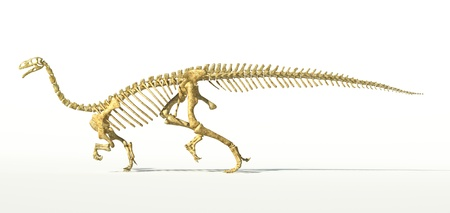 scientifically: Plateosaurus dinosaur, full photo-realistic skeleton, scientifically correct. SIde view On white background. WIth drop shadow and clipping path included.