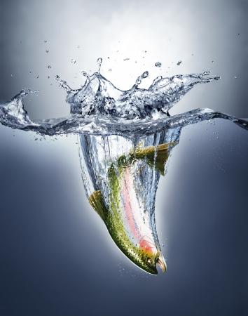 Salmon fish splashing into water forming a crown splash over the surface and a water trail under  Imagens
