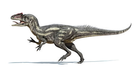 Photorealistic and scientifically correct 3 D rendering of an Allosaurus dinosaur   Viewed from a side, while walking