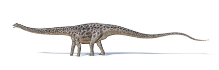 diplodocus: Photorealistic and scientifically correct 3 D rendering of a Diplodocus dinosaur   Viewed from a side, while walking  On white background with drop shadow  Clipping path included