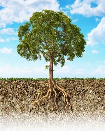 Cross section of soil showing a tree with its roots  Grass on the surface and fluffy clouds sky in the background  Stock Photo - 23042278