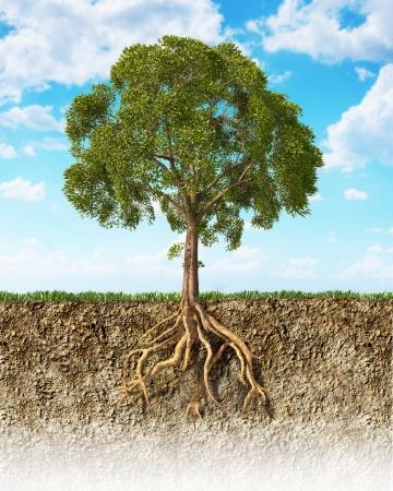 boom wortels: Dwarsdoorsnede van de bodem met een boom met zijn wortels Gras op het oppervlak en pluizige wolken hemel op de achtergrond