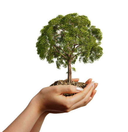 Woman s hands holding soil with a tree Stock Photo - 23042284