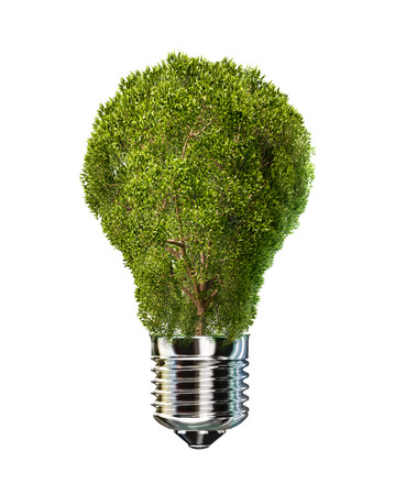 Light bulb with tree in place of glass. On white background. photo