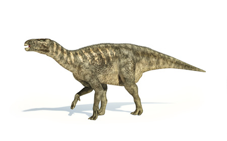 backgraound: Iguanodon Dinosaur photorealistic and scientifically correct representation, side view. On white backgraound and drop shadow. Clipping path included.