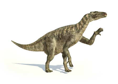 scientifically: Iguanodon Dinosaur photorealistic and scientifically correct representation, in dynamic posture. On white backgraound and drop shadow. Clipping path included. Stock Photo