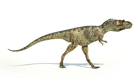 scientifically: Albertosaurus Dinosaur, photorealistic and scientifically correct representation, side view. On white background with drop shadow. Clipping path included. Stock Photo