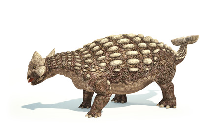 scientifically: Ankylosaurus Dinosaur photorealistic and scientifically correct representation. Dynamic posture. On white background with drop shadow. Clipping path included.