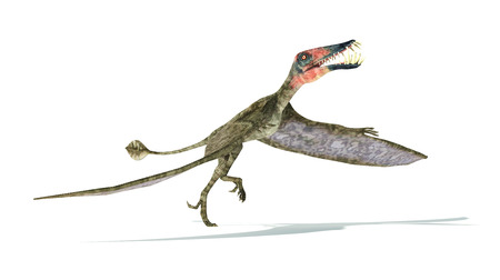 scientifically: Dorygnathus flying Dinosaur photorealistic and scientifically correct representation, take off view.