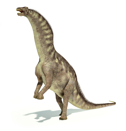 sauropod: Photorealistic and scientifically correct representation of an Amargasaurus dinosaur. Dynamic posture.