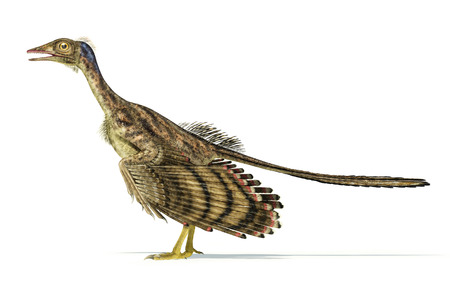 scientifically: Photorealistic and scientifically correct representation of an Archaeopteryx dinosaur.