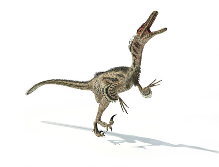 dangerously: Velociraptor dinosaur, scientifically correct, with feathers.
