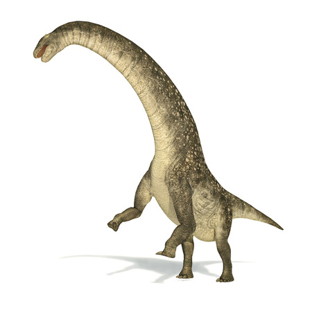 scientifically: Titanosaurus dinosaur, photorealistic and scientifically correct representation. Dinamic view. On white background with drop shadow.  Stock Photo