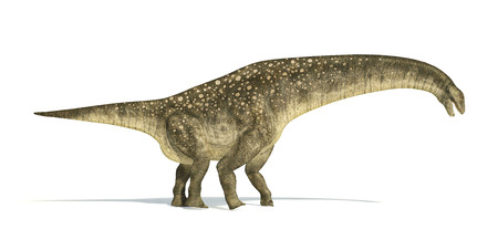 chordata: Titanosaurus dinosaur, photorealistic and scientifically correct representation. Side view.