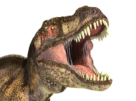Tyrannosaurus Rex dinosaur, photorealistic representation, Scientifically correct. Head close up, with open mouth.