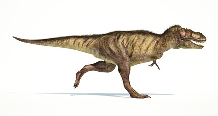 scientifically: Tyrannosaurus Rex dinosaur, full body photorealistic representation, scientifically correct. Side view, while walking fast, with open mouth.