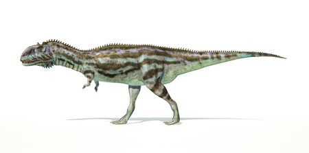 scientifically: Majungasaurus dinosaur, full body photorealistic representation, scientifically correct. Side view,  Stock Photo