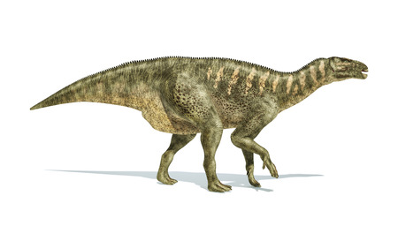 scientifically: Iguanodon Dinosaur photorealistic and scientifically correct representation, side view.