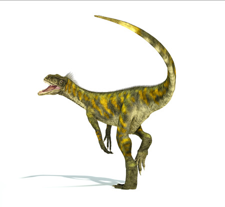 Herrerasaurus dinosaur, photorealistic representation, scientifically correct. Dynamic view,  with open mouth.