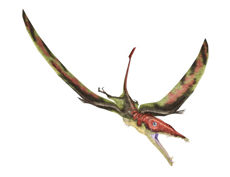 Eudimorphodon flying prehistoric reptile, photorealistic representation, scientifically correct. Dynamic view