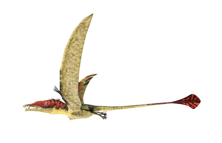 scientifically: Eudimorphodon flying prehistoric reptile, photorealistic representation, scientifically correct. Side view, On white background. Clipping path included. Stock Photo