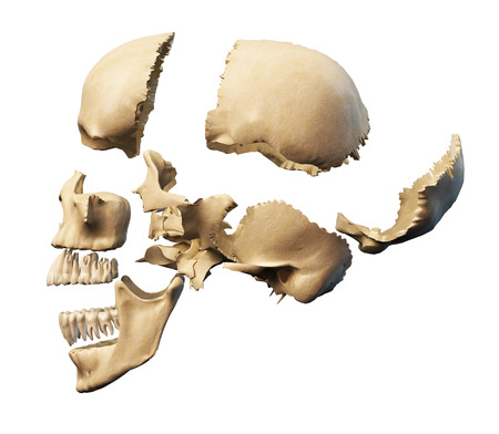 skull cranium: Human skull with parts exploded  Side view, on white background  Clipping path included  Stock Photo