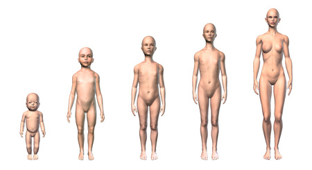 Female human body scheme of different ages stages, showing five different ages with relative body shapes  On white background  Clipping path included  Anatomy image