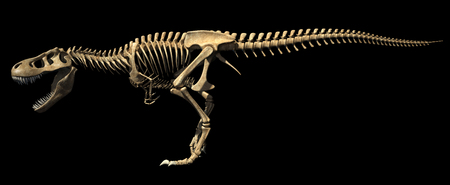 T Rex dinosaur photo-realistic and scientifically correct, full skeleton in dynamic poses, side view. On black background, clipping path included.