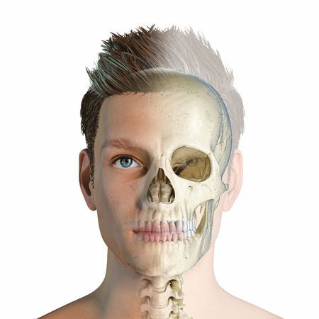Man head with skull in ghost effect. Front view on white background. Stockfoto