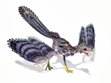 Archaeopteryx dinosaur isolated on white background with dropped shadow.