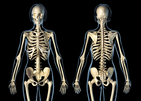 Woman skeletal system front and rear views. On black background. Imagens