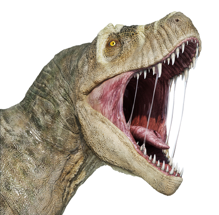 T-rex head close-up with open mouth, isolated on white background. Standard-Bild - 120521977