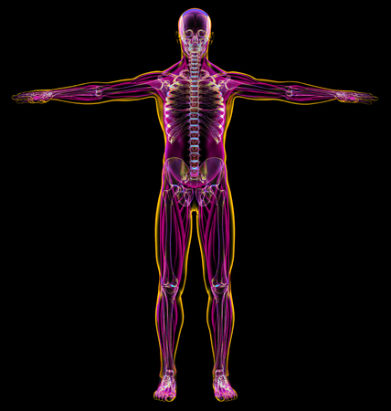 Man diagram x-ray muscular and skeletal systems. On black background.